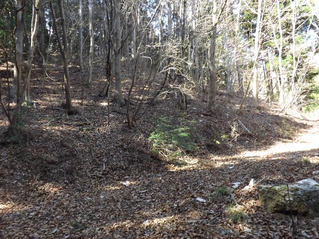 山林と敷地