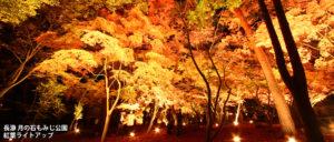 長瀞 月の石もみじ公園紅葉ライトアップ